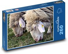 Sheep Puzzle of 260 pieces